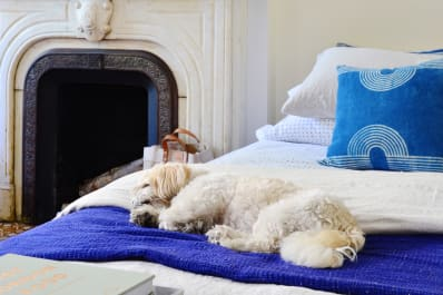 Guide to Dealing with Dog Odors in a Small Space Home