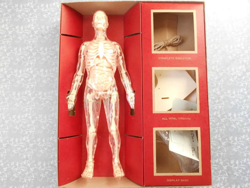 The Visible Man 1959 Introduction to Anatomy ga... - Apartment ...