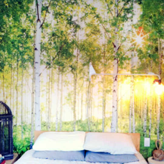 National Geographic Sunday Wall Mural