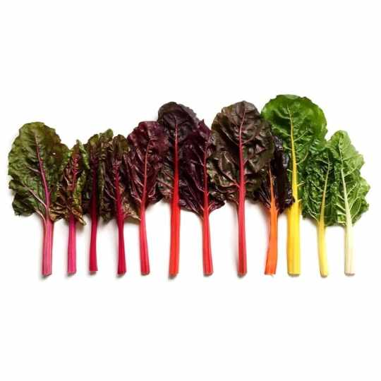 Rainbow Chard Gradients from Wright Kitchen