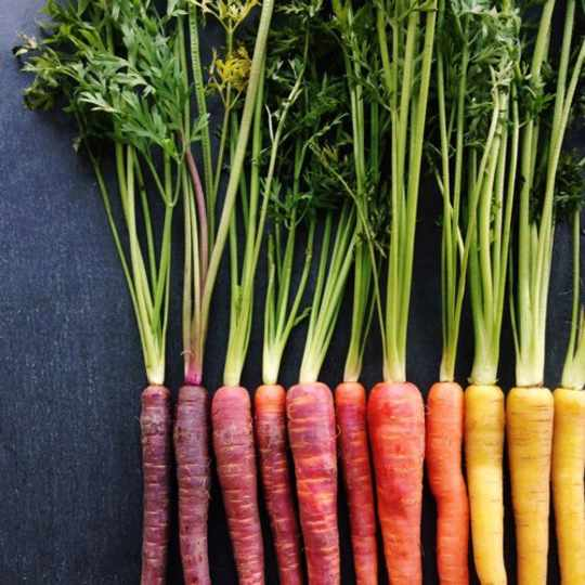 Carrots Gradient from Wright Kitchen
