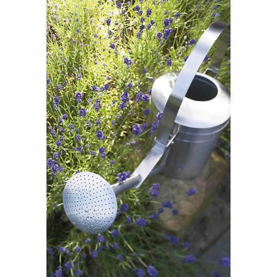 AGUO Sprinkle Head Watering Can by stotz-design