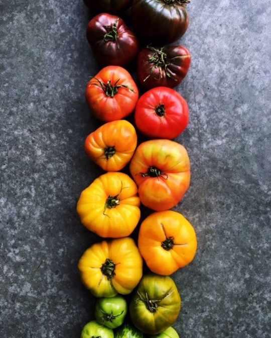Tomato Gradient Print from Wright Kitchen