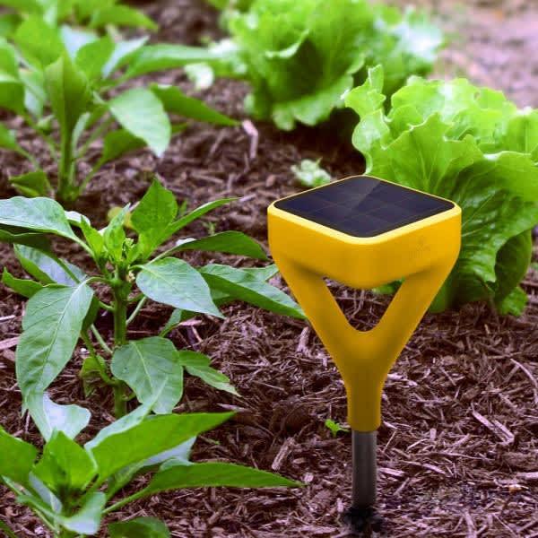 edyn garden sensor helps you plug in to your gardens health apartment therapy - Edyn Garden Sensor