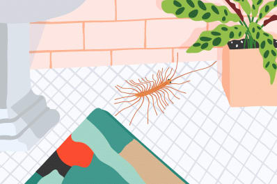 house centipede apartment therapy
