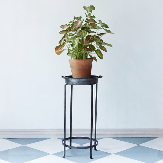 Iron Tray Plant Stand, Medium
