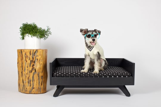 Pup & Kit Special Edition Joey High Back Bed