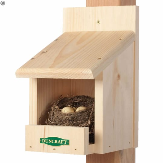 Best Nesting Shelf
