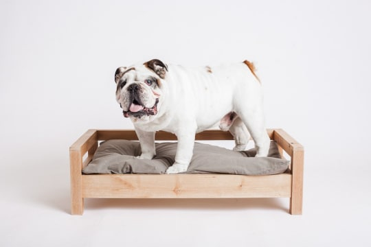Cozy Cama Purebred Bed