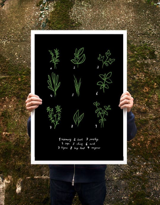 Botanical Chart Herbs Poster by Anek