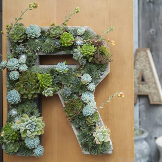 Succulent Letters & Numbers