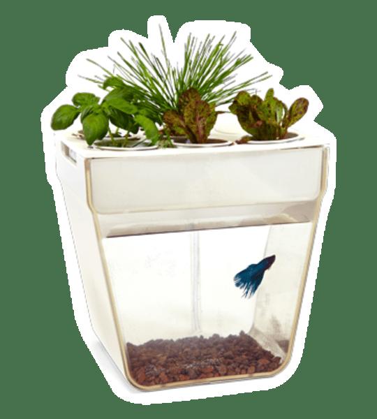 The Aqua Farm