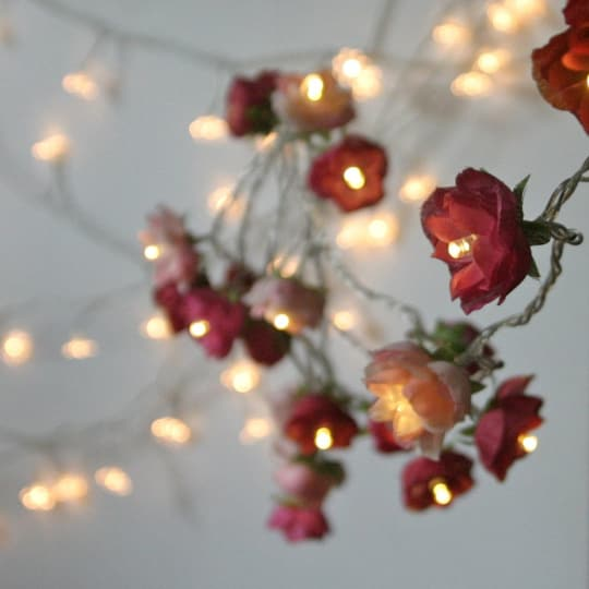 Rose Fairy Lights by Pamela Angus