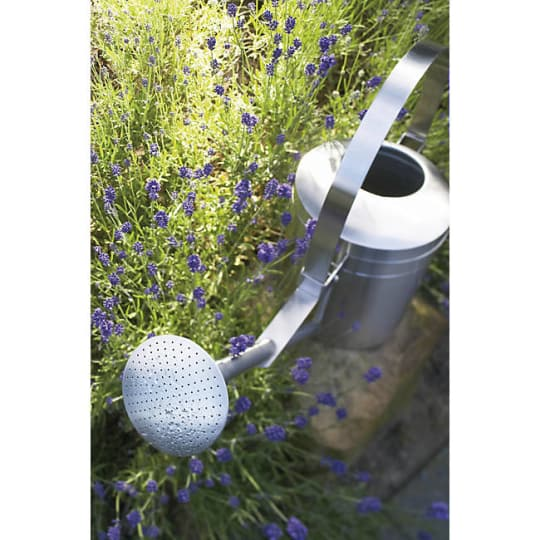 AGUO Sprinkle Head Watering Can by stotz-design