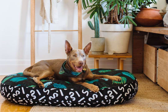 Nice Digs Jungle Fever Dog Bed