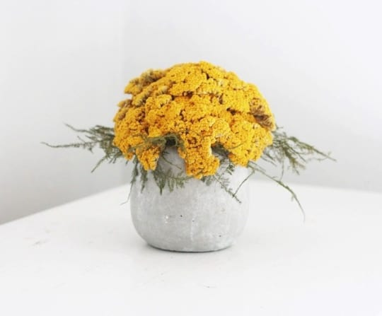 Yarrow Dried Flower Arrangement from Flores del Sol