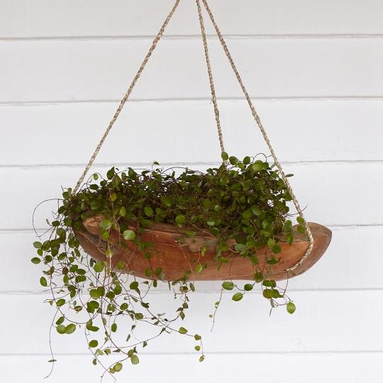 Teak Hanging Planter by Terrain