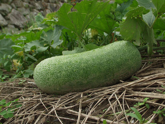 vegetarian recipe winter melon soup kitchn