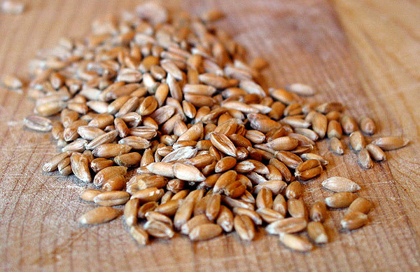 good grains what is spelt kitchn
