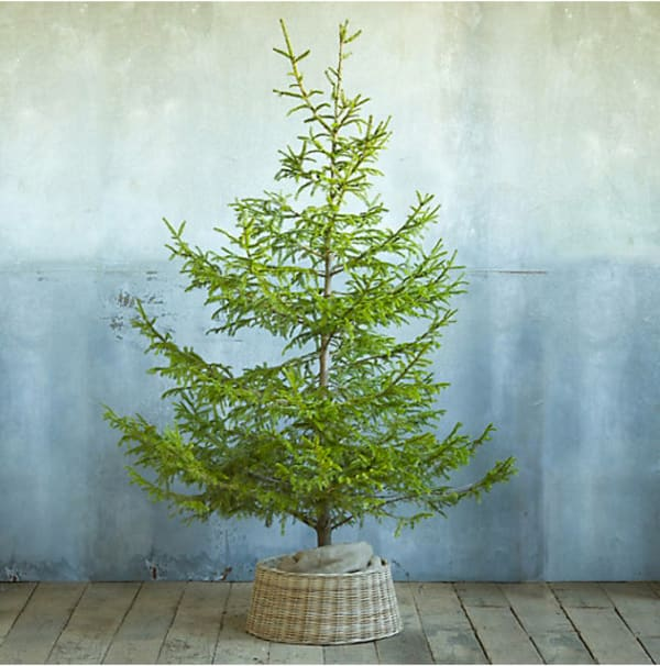 Easy Decorating Ideas: 5 Alternatives to Christmas Tree Skirts | Apartment  Therapy - Easy Decorating Ideas: 5 Alternatives To Christmas Tree Skirts