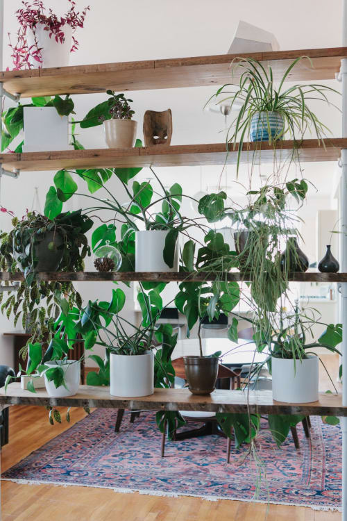 Indoor Plant Decorating Ideas Apartment Therapy