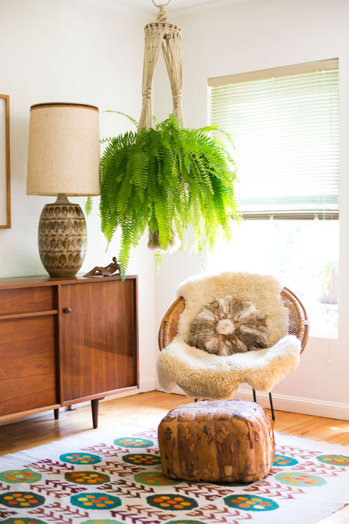 small indoor plants, best indoor plants, hanging fern