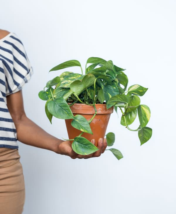 budget friendly sources for buying plants online apartment therapy