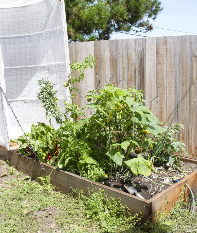 DIY Covered Greenhouse Garden: A Removable Cover Solution