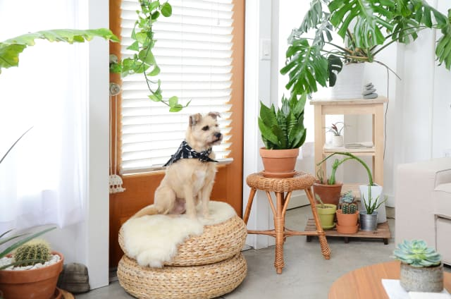 How To Remove Pet Hair From Furniture Floors More Apartment Therapy