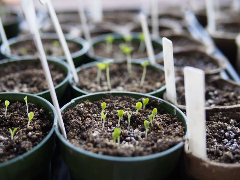 Inside or Outside: Which to Choose When Starting Plants From Seed