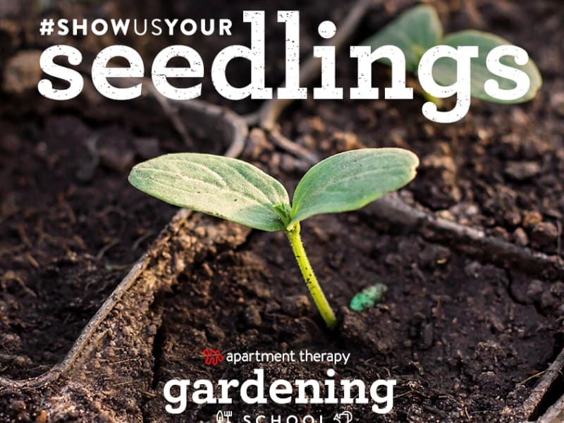 Did you #ShowUsYourSeedlings? Here are our favorites!