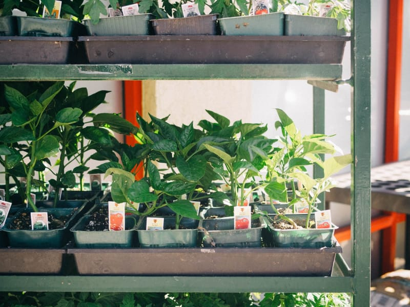 The Fun Part: Choosing the Right Plants for Your Space and Lifestyle