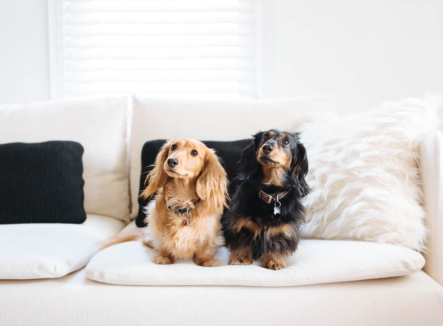 Best Upholstery Fabrics for Cat & Dog Owners | Apartment Therapy