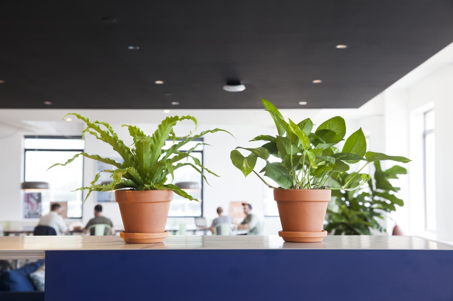 Office Plants Best Low Light Maintenance Plants Apartment Therapy