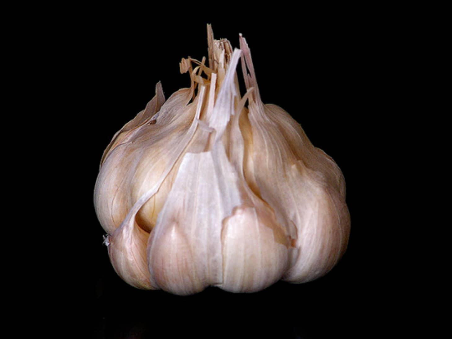Who Knew? Garlic May Have Antibiotic Properties | Kitchn