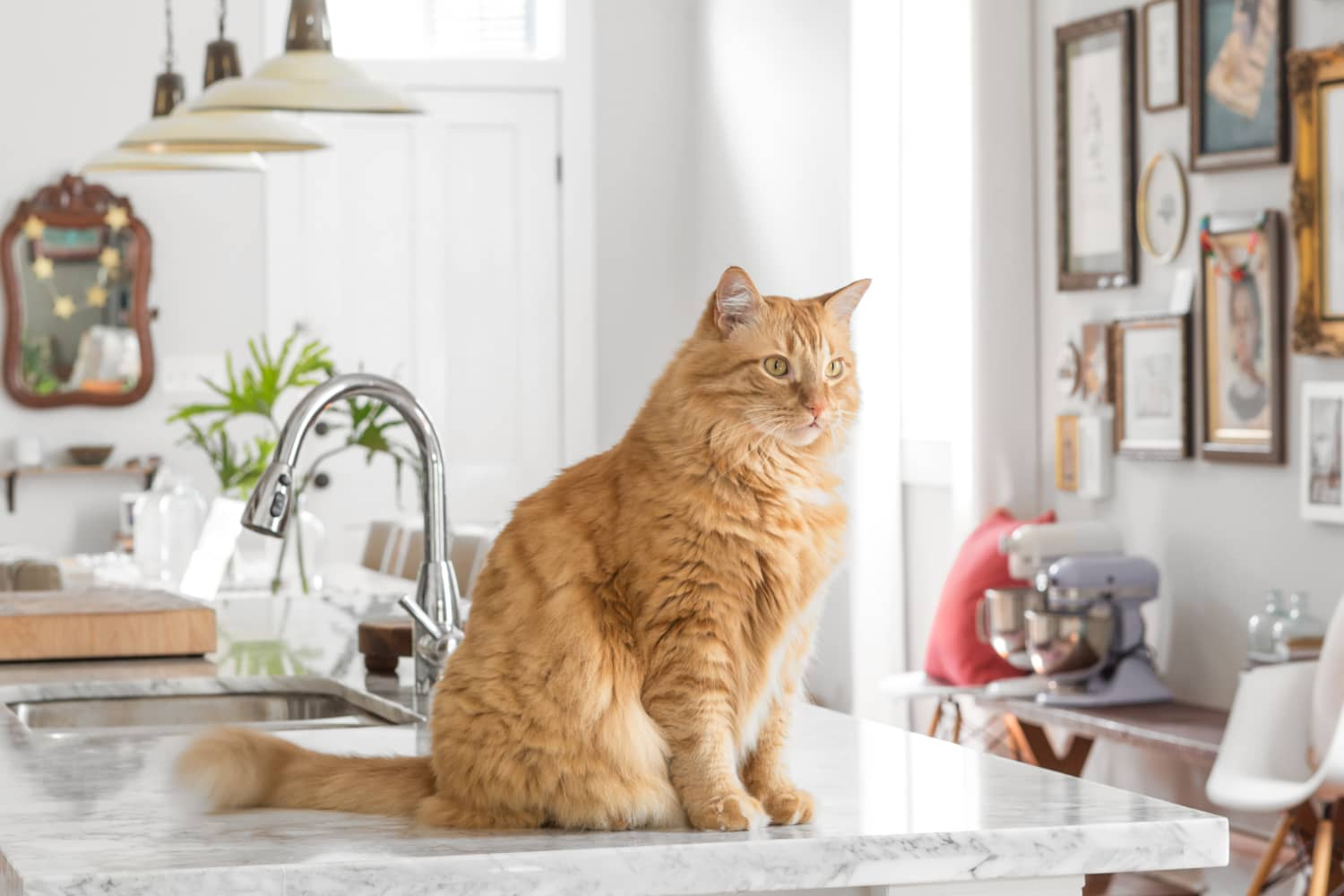 Tips For Keeping Cats Off Kitchen Counters Apartment Therapy
