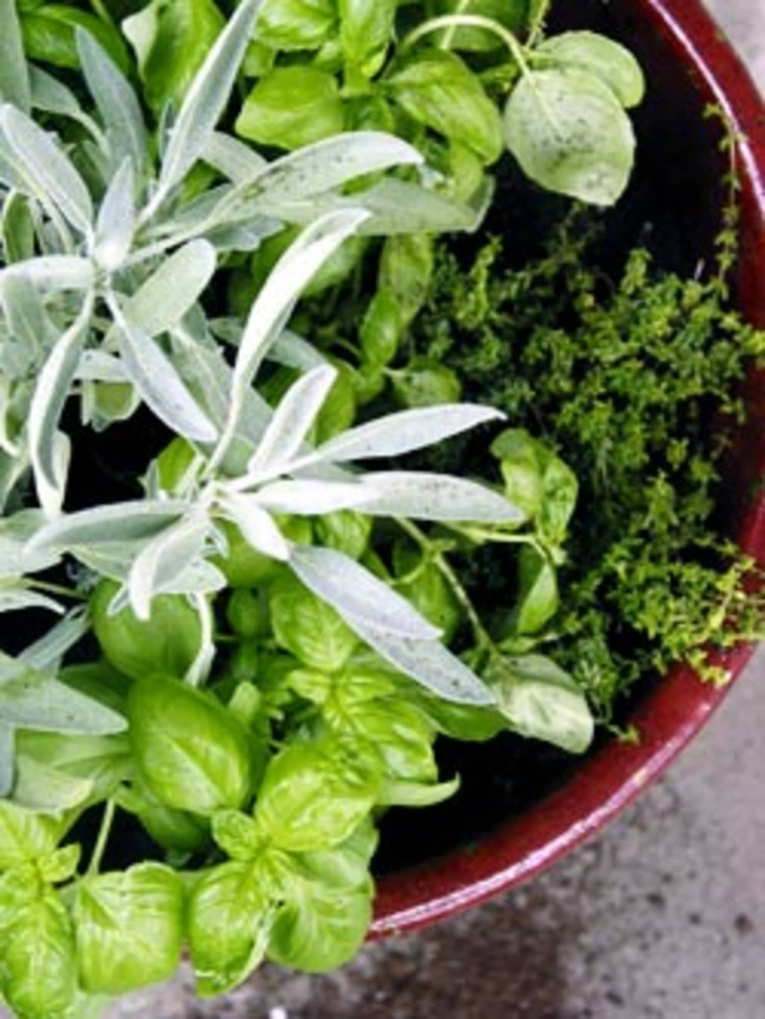 How To: Make a One-Pot Indoor Herb Garden   Apartment Therapy