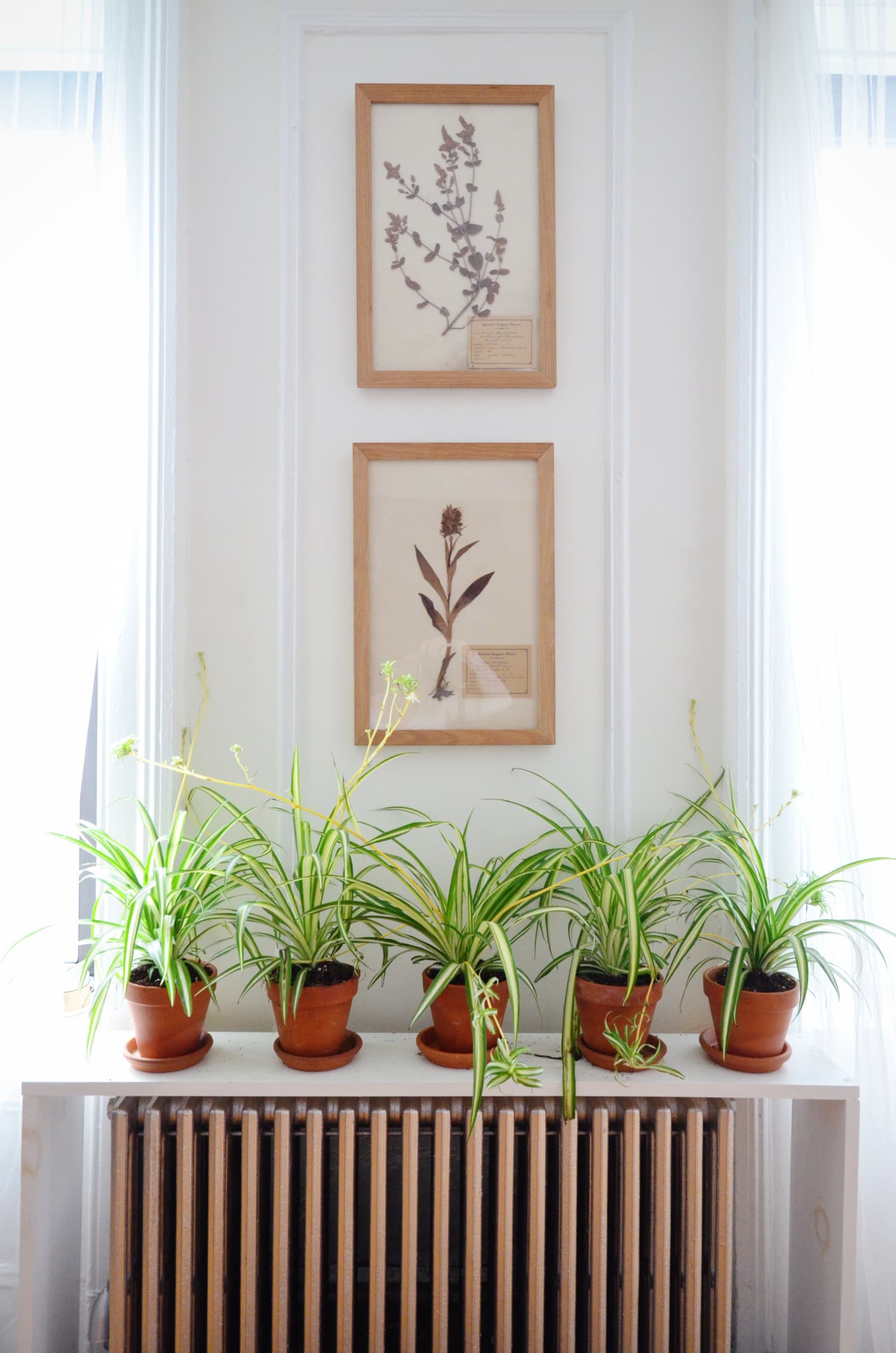5 Hard-to-Kill Houseplants for Apartments with Low Light