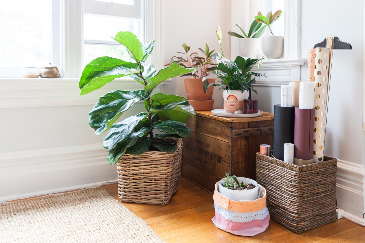 5 Ingenious Plant Tricks You Haven't Tried Yet