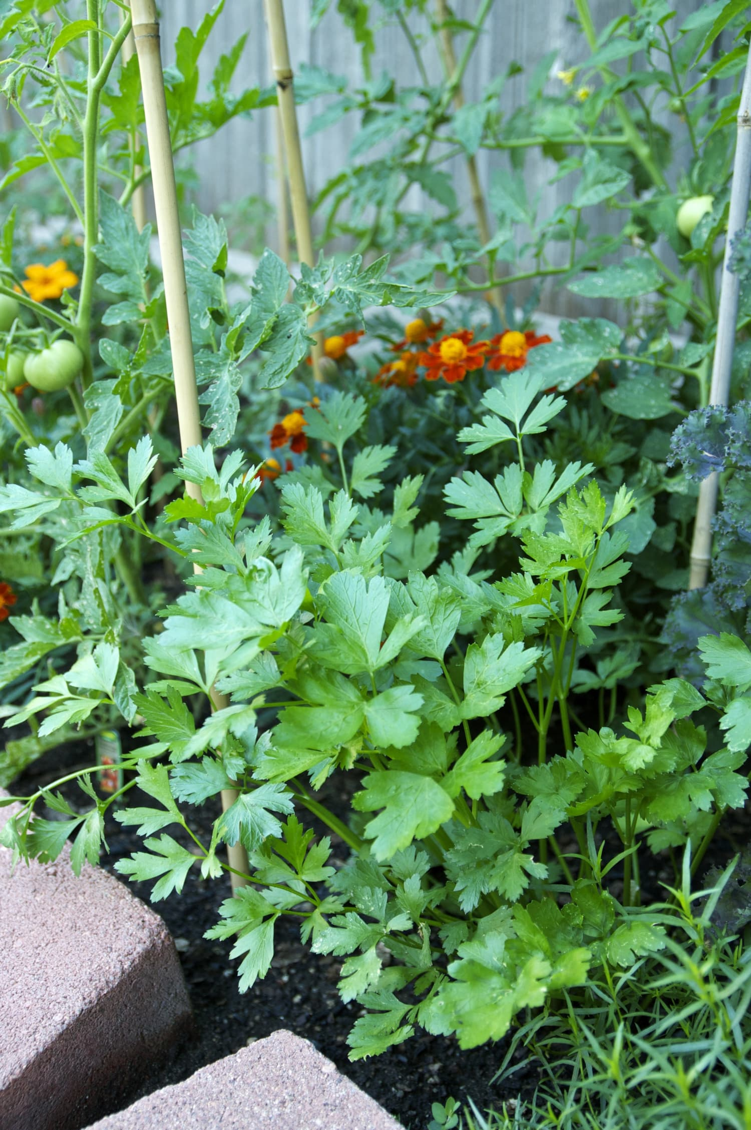 Everything You Need to Know About Growing Parsley | Kitchn