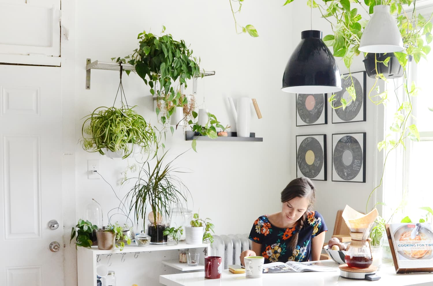 8 Of The Best House Plants For The Kitchen Kitchn