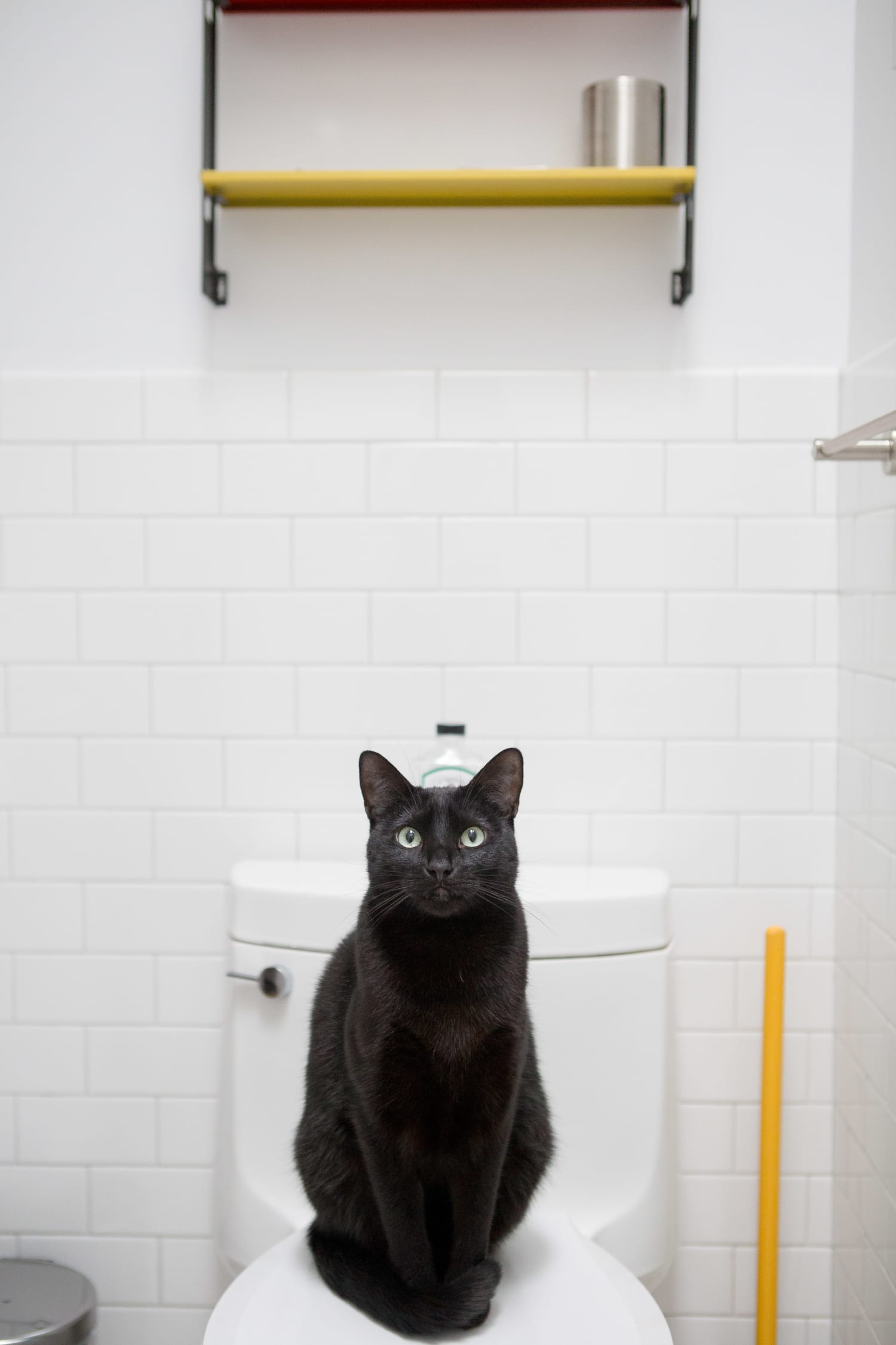 Design Friendly Litter Boxes For Every Style Apartment