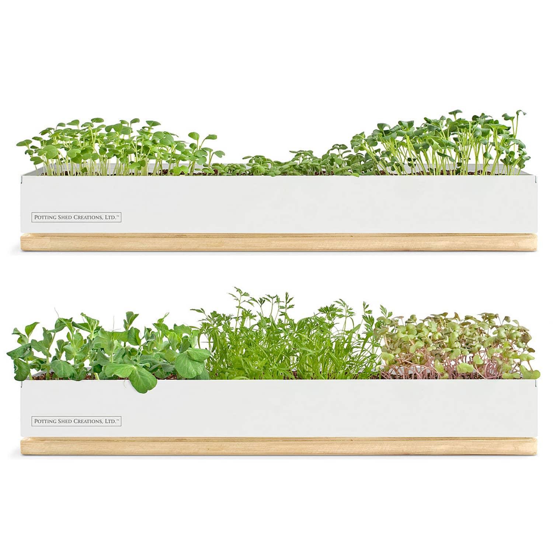 Windowsill Herb Planter: Grow Microgreens On Your Windowsill With This Kit
