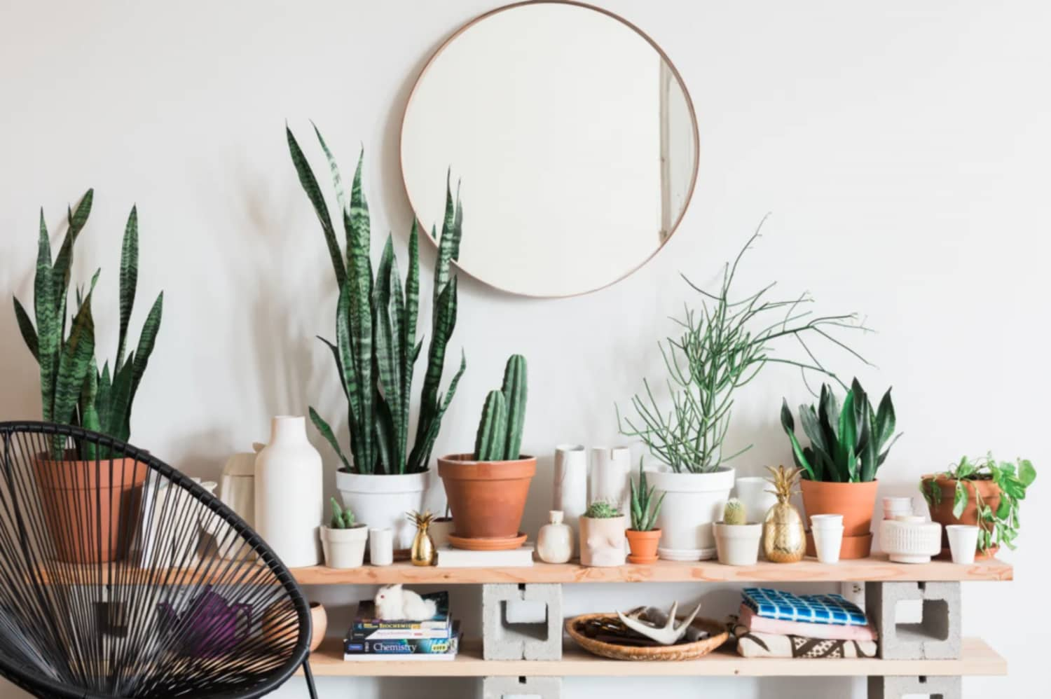 We Plant Even: Amazon Is Having A One-Day Sale On House Plants