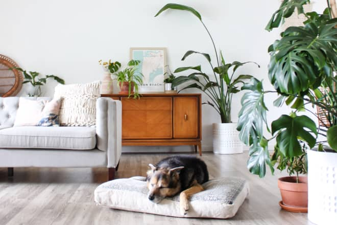 100+ Plants and Two Dogs Fill This Interior Designer's Bright and Peaceful Home