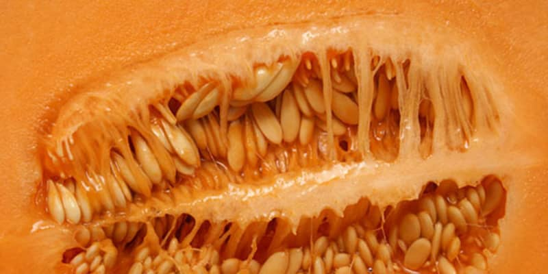 Fear Of Cantaloupes Crumpets More Is Trypophobia For Real