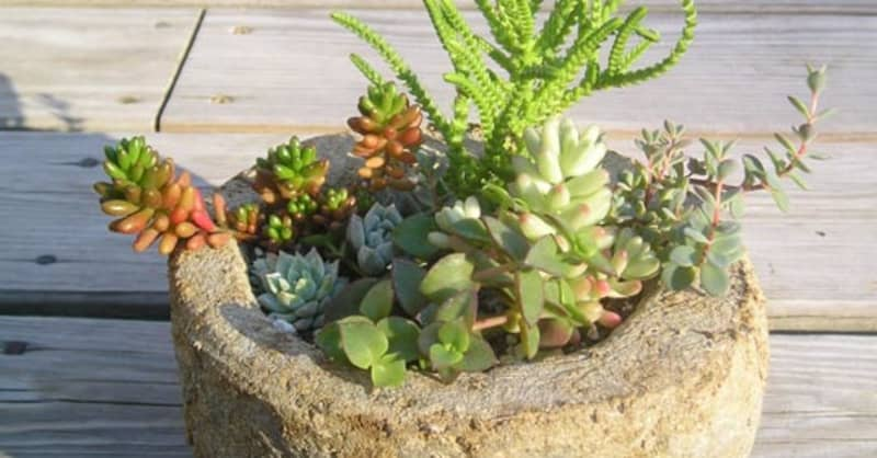 How To: Callus Succulents and Cacti | Apartment Therapy