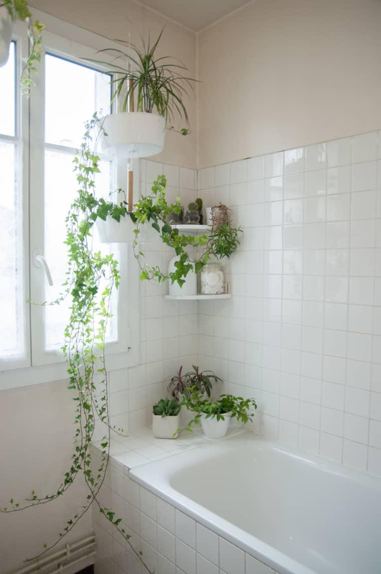 kamar mandi dengan tanaman