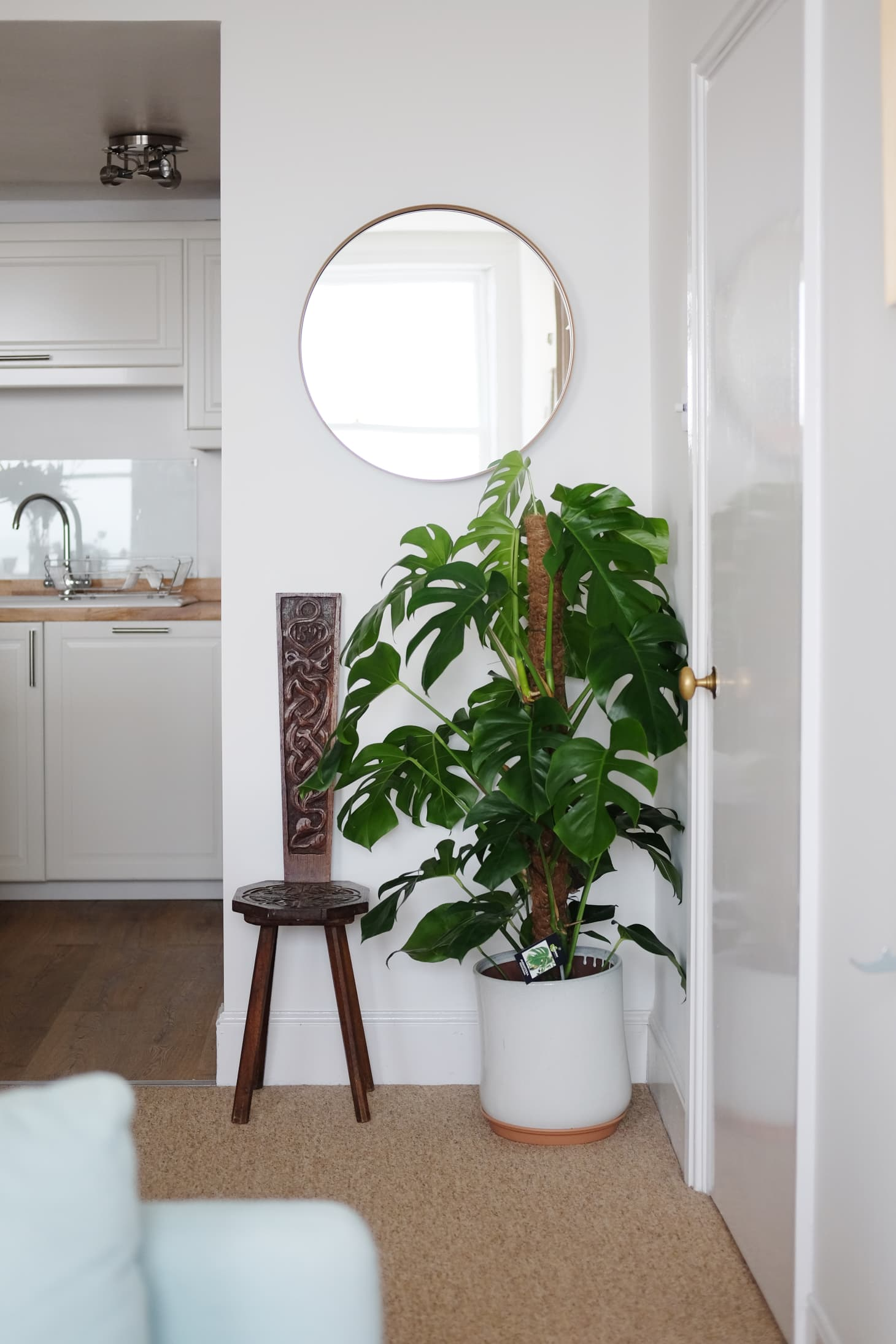 Monstera Deliciosa Plant - Growing Care and Propagation ... on