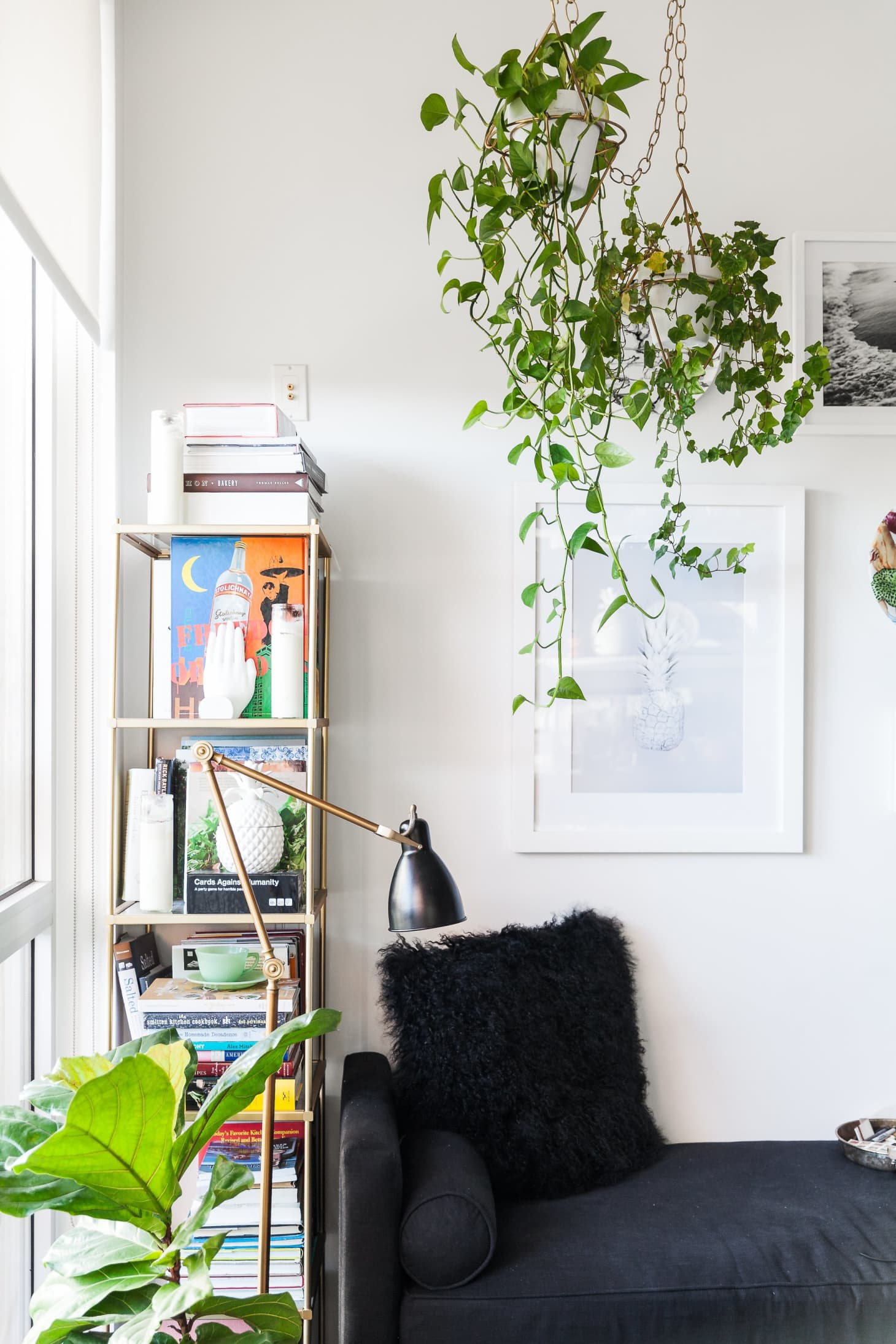 English Ivy: Best Tips for Growing + Care | Apartment Therapy on common plants used in baskets florist, common house plant problems, common household plants, round leaves with ivy, variegated ivy, common names of indoor plants, hedera glacier ivy,